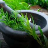 soin et plantes
